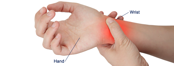 pain-locator-hand-wrist | orofino physical therapy, Skeleton