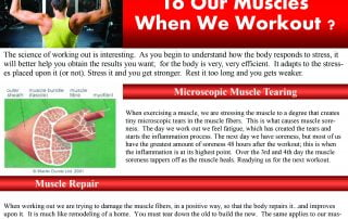 Muscle Response to Exercise